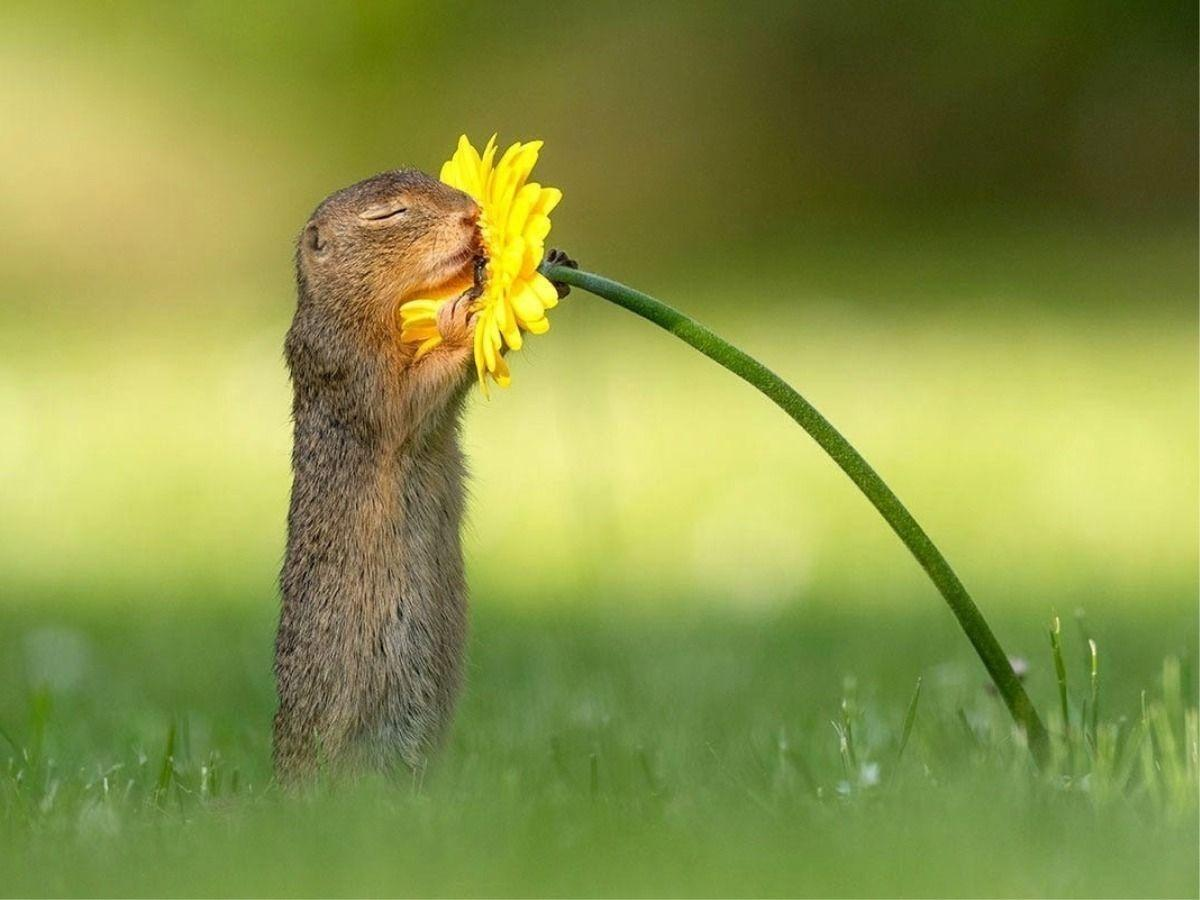 Photo Of A Squirrel Smelling A Flower Is Simply Amazing Great Example Of Wildlife Photography