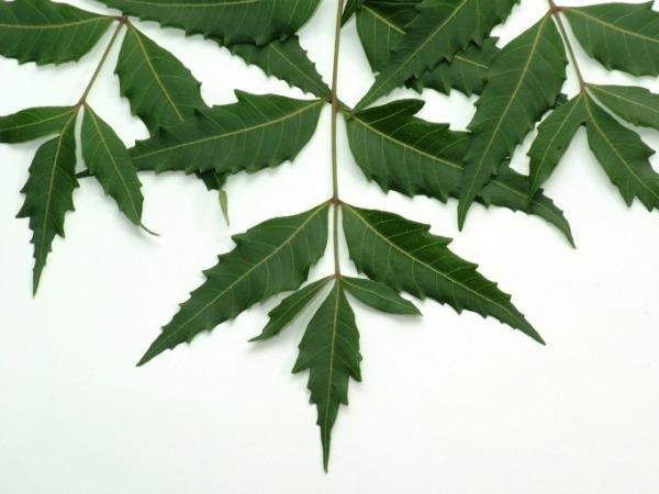 Herbal Remedies: 20 Health Benefits Of Neem