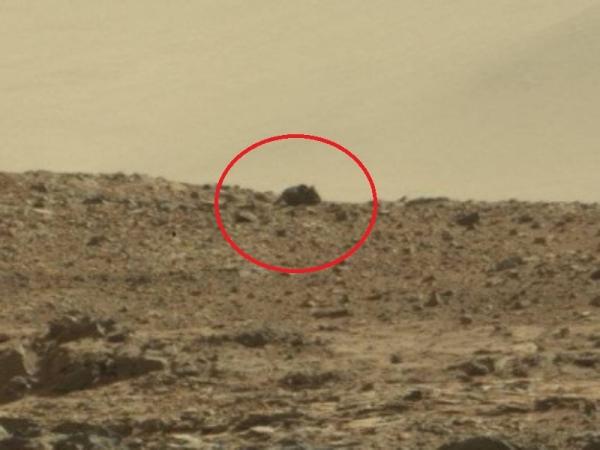 mouse on mars curiosity rover