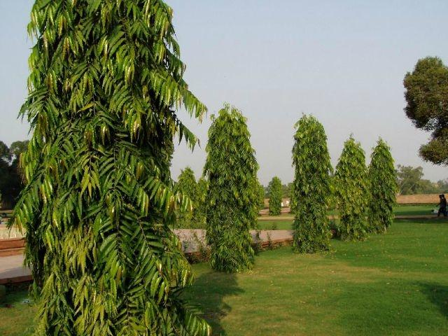 9 Trees That Grow In India And All You Need To Know About Them