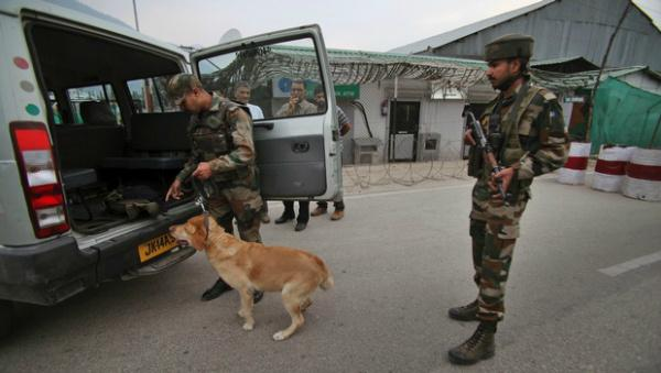 army india dogs