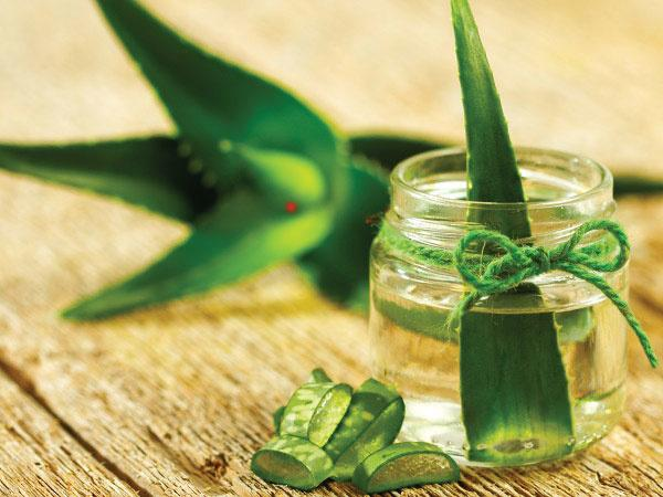 28 Reasons Why Aloe Vera Juice Should Be A Part Of Your