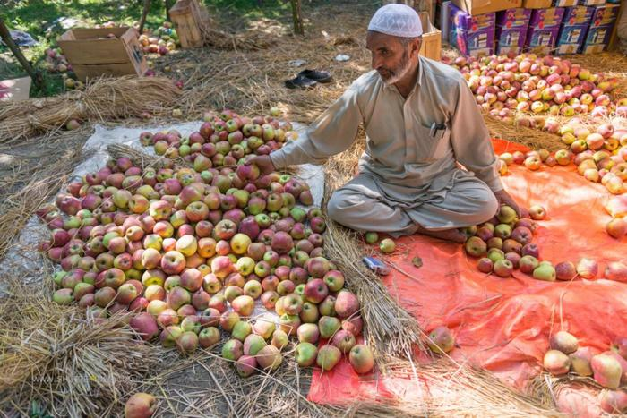 Jammu and Kashmir economy hit, losses touch Rs 6,000 crore