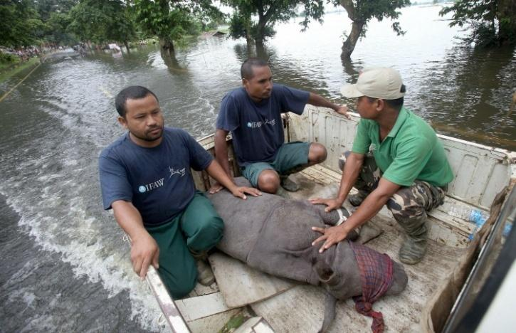 Ferrying rhino calf to hospital