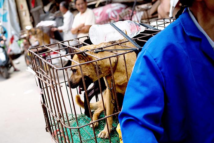 Nagaland Dog