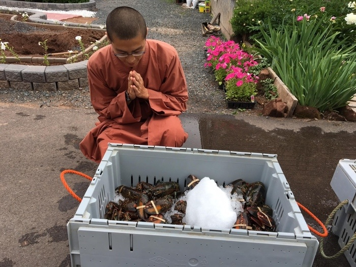 Buddhist Monks Buy 600 Lobsters For Rs. 3.2 Lakh, Release Them Back In The Ocean!
