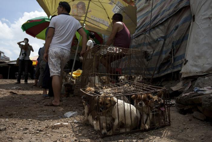 The Yulin Festival Has Started, And 10,000 Dogs Are On The Menu
