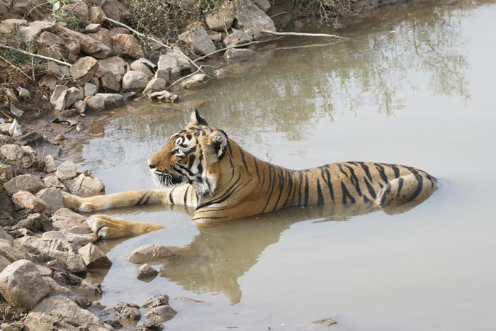 Water Tankers Bringing In 1.5 Lakh Litres Of Water For Animals In Corbett National Park