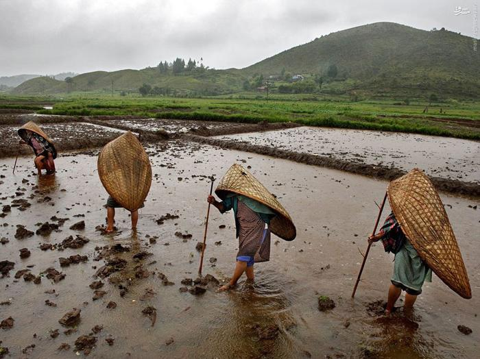 the secret of world s rainiest place mawsynram which is also world s
