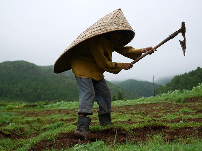 ________ receives the highest average annual rainfall in the world. - Mawsynram