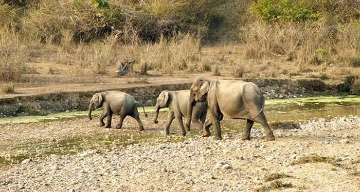 Selfie Craze Of Tourists Is Forcing Elephant Herds Abandon Water Sources In Corbett National Park