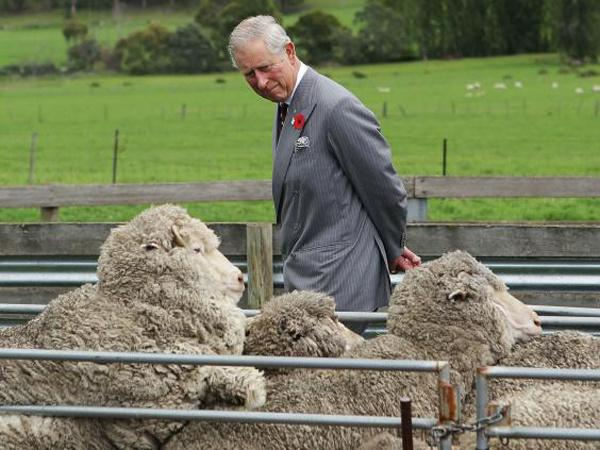 Prince Charles Homeopathy