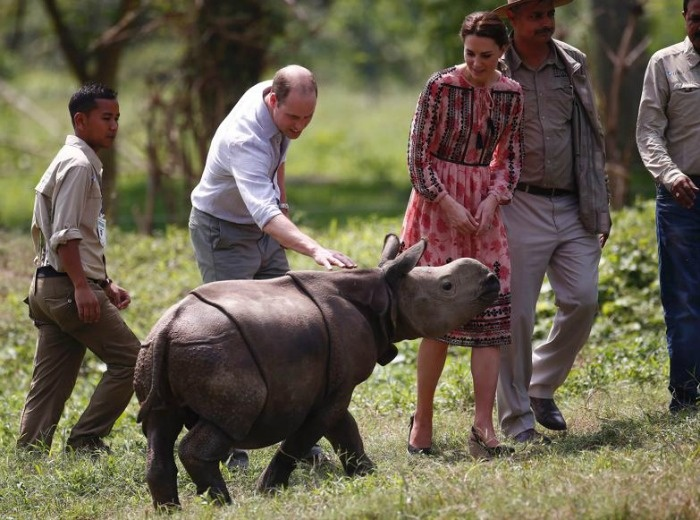 essay on rhino poaching in assam