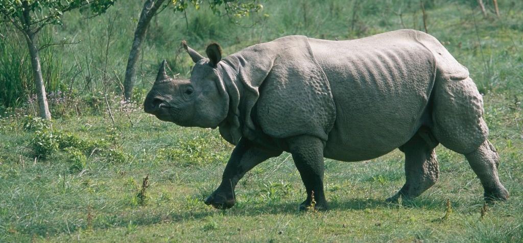 essay on rhino poaching in assam