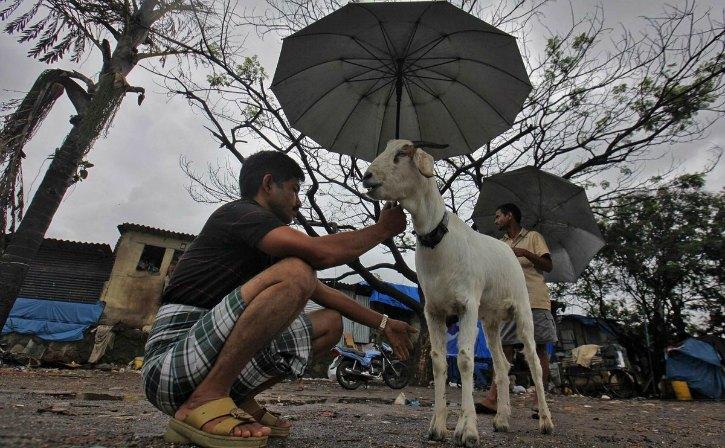 animal stranded