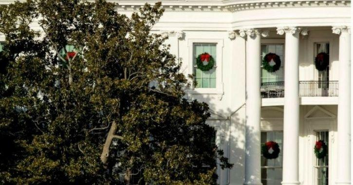 Historic Magnolia Tree Planted By Us President Jackson In White