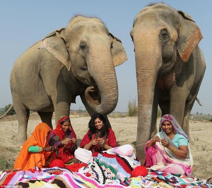 a5770d79dc33 NGO Workers Knit Up XXXXXXXXL Sized Sweaters For Their Elephants In ...