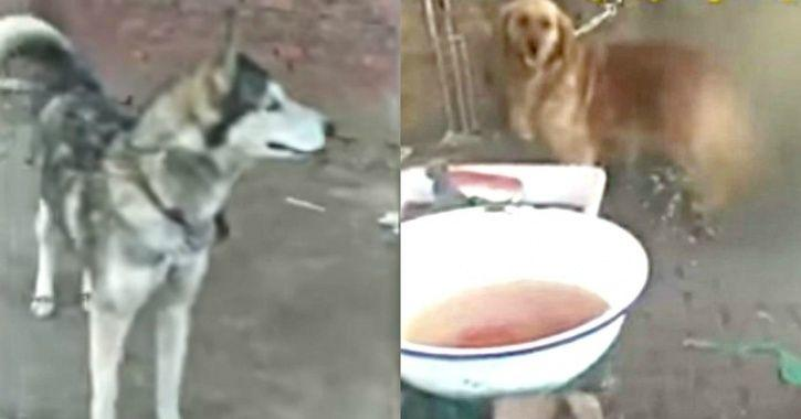 Barbaric Video Shows Chinese Slaughterhouse Demanding Rs 14K