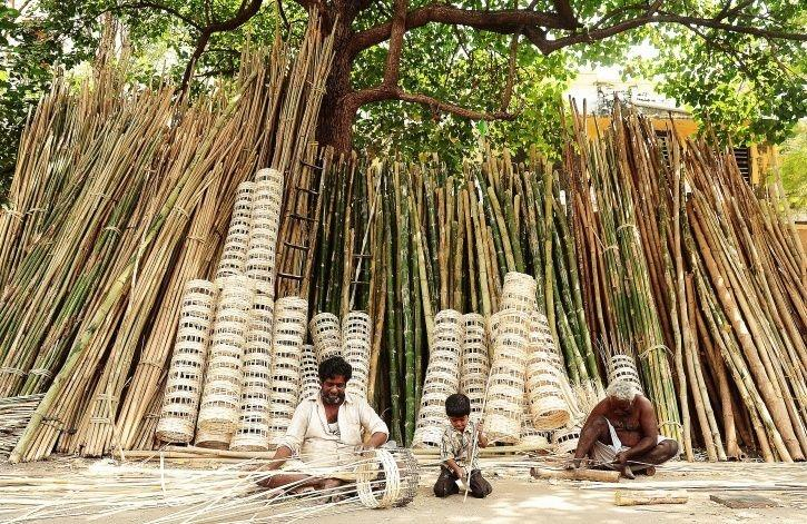 Bamboo, Classified As A 'Tree' For Almost 90 Years, Gets Demoted To