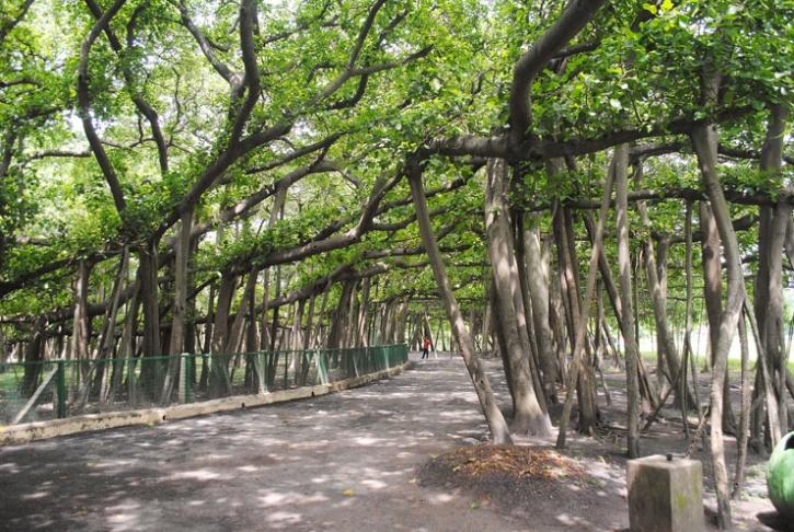 indian botanic garden