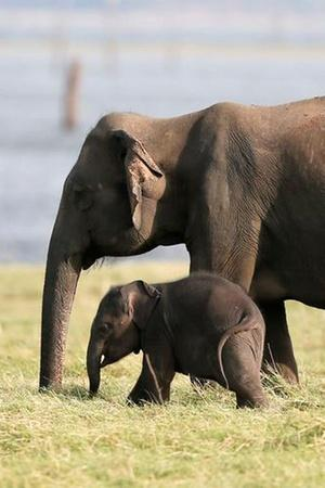 Cancer Rarely Affects Elephants