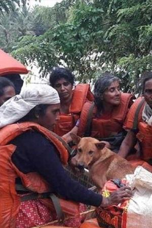 Dogs Pets Kerala Floods People India Gods Country Relief Camp
