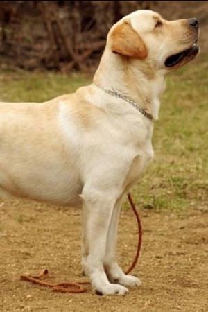 India Rape People Pet Animals Dogs Rapists Girl