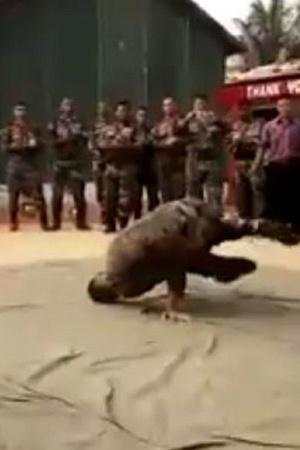 Indian Army Indian Soldier Man India Forces Dance Dance Movies People