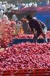 Farmer Who Donated Rs 1064 From Selling 750 Kg Of Onions Asked To Make Online Transfer By PMO