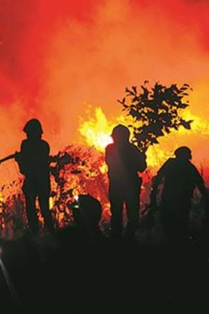 FourKilometreWide Fire Engulfs Aarey Forest While Mumbaikars Fight To Save Its Last Green Patch