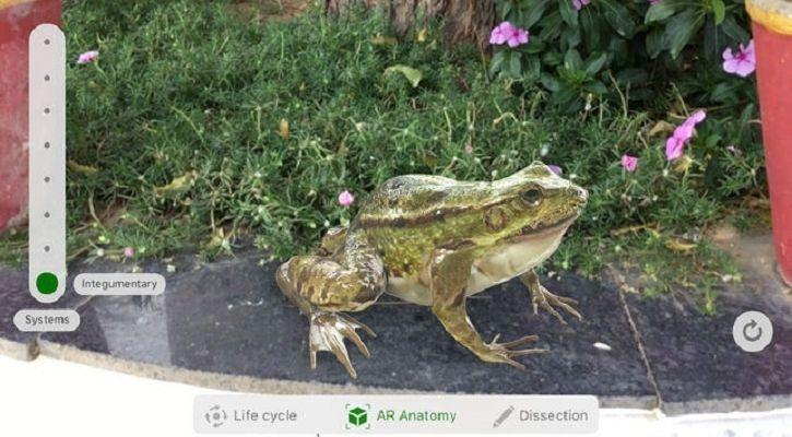Froggipedia
