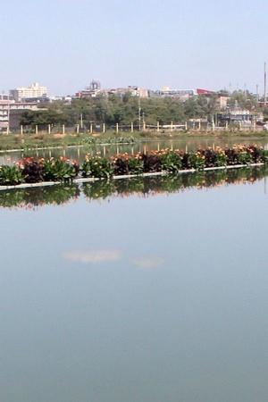 Hebbagodi lake Bengaluru limca book of records biocon vegetation floating island