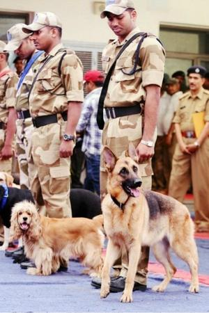 robot canine dogs cisf airport security india