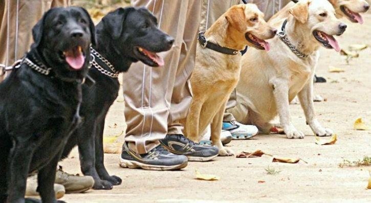 sniffer dogs vs robotic dogs cisf india airports