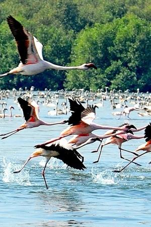 Thane Creek Flamingo Sanctuary