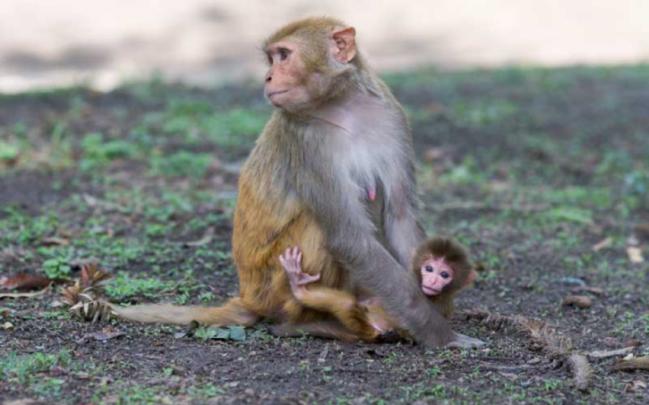 The World's Oldest Monkey Can Help Us Fight HIV