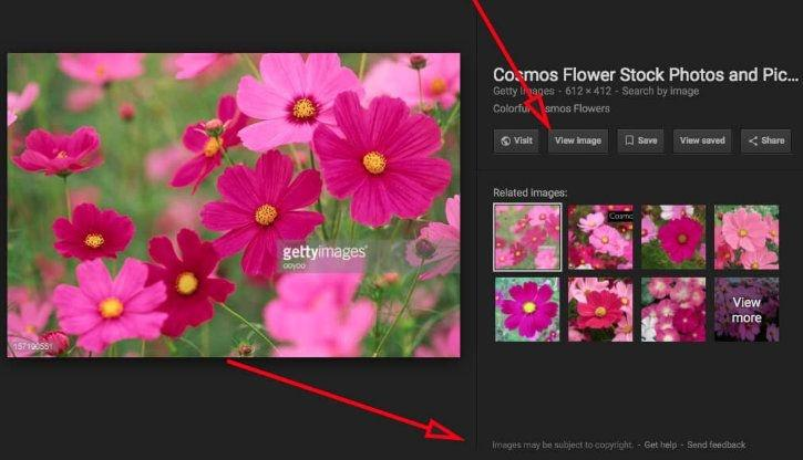 Google removes View Image button from search