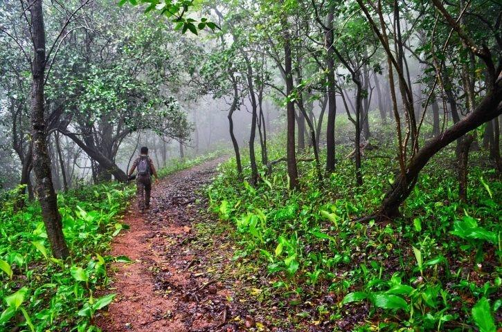 India Makes Marginal Increase In Forest Cover Area