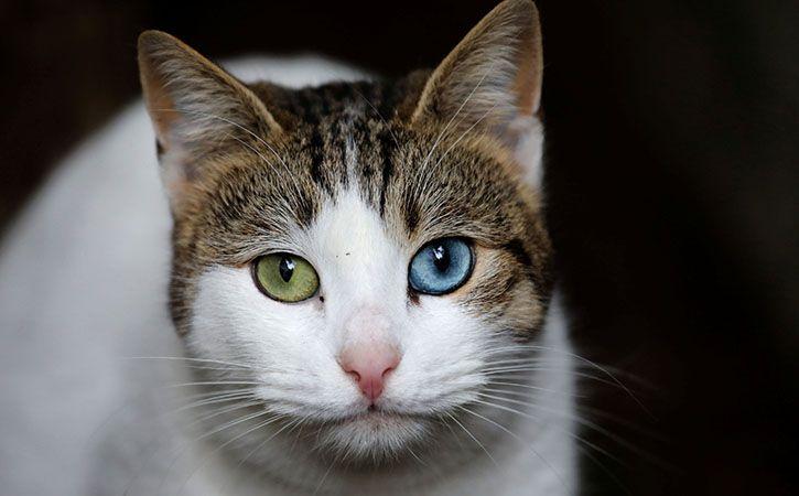 Police Rescue 12 Cats Trapped For Biryani From Narikuravas
