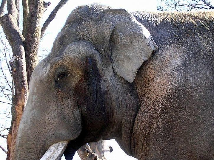 Six Captive Elephants Died In Kerala In One Month