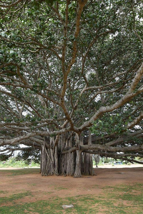 essay on importance of trees for class 5