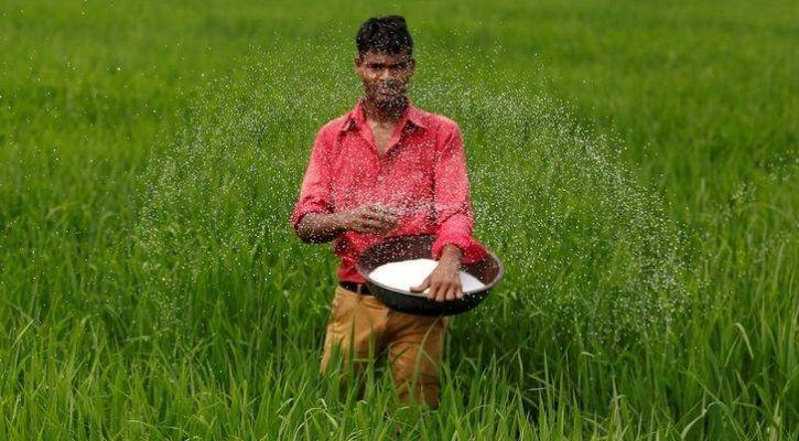 rice sowing