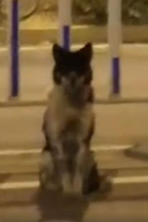China dog
