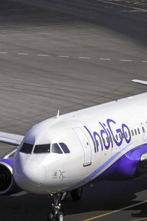 In A Hurry To Take Off From Hyderabad Indigo Leaves Behind Cat Boss