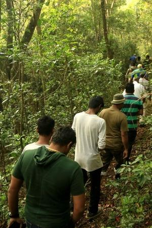 Kurangani forest