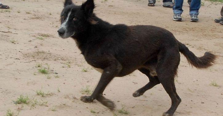 Male Dog Gangraped