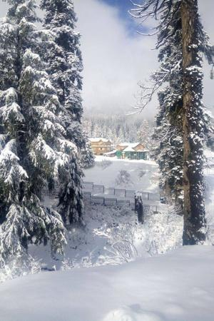 While It May Look Captivating November Snowfall In Kashmir Declared Special Natural Calamity