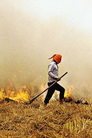 As StubbleBurning Season Begins Farmers Say Government Solutions Unaffordable Fine Not Justified
