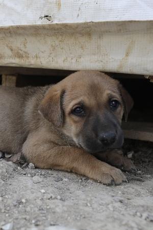 Delhi Man kills puppy