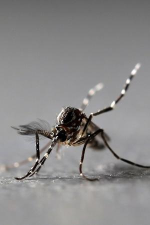 India Made Weapon Against Mosquitoes